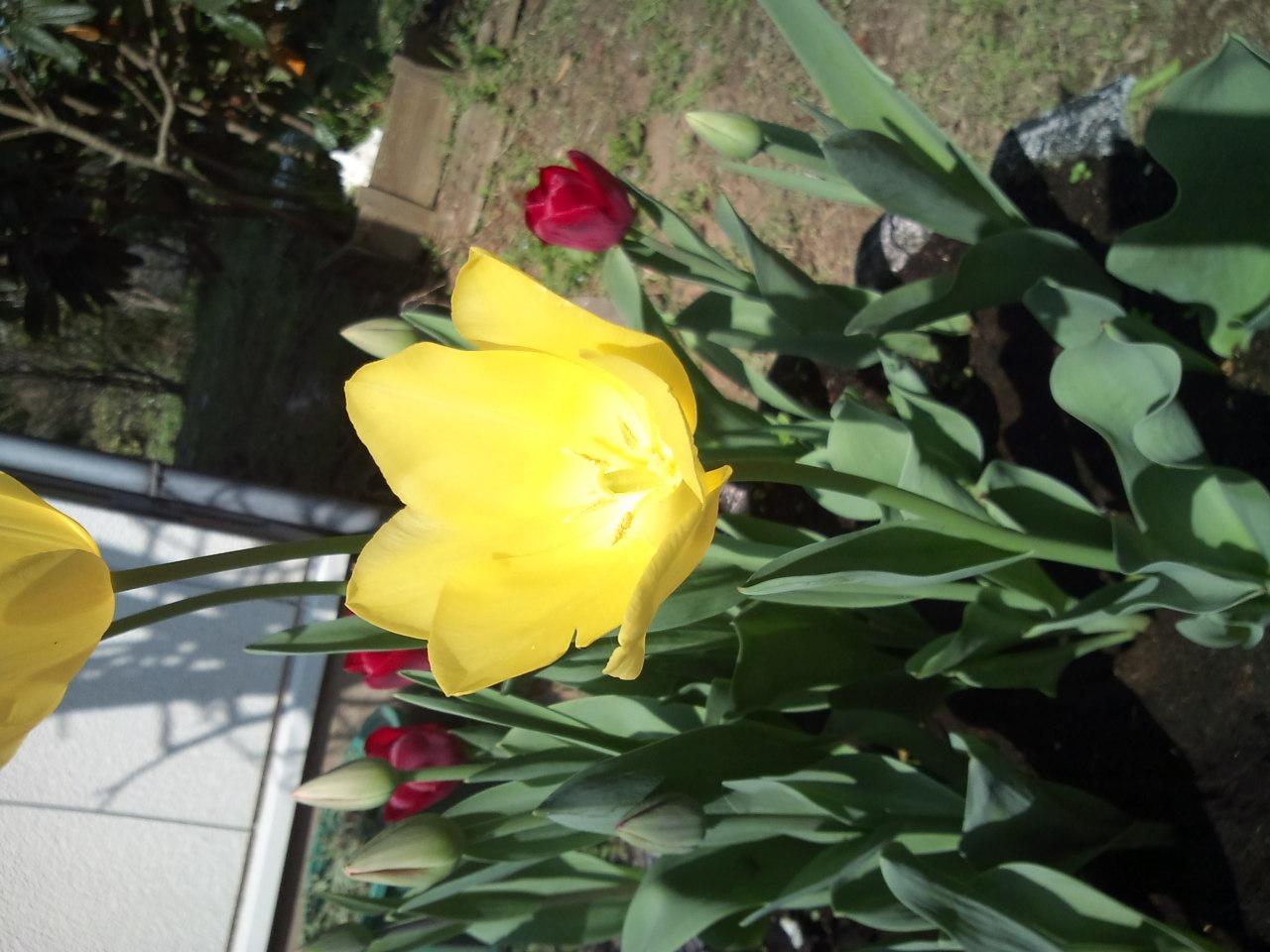 春の花_e0246300_14222318.jpg