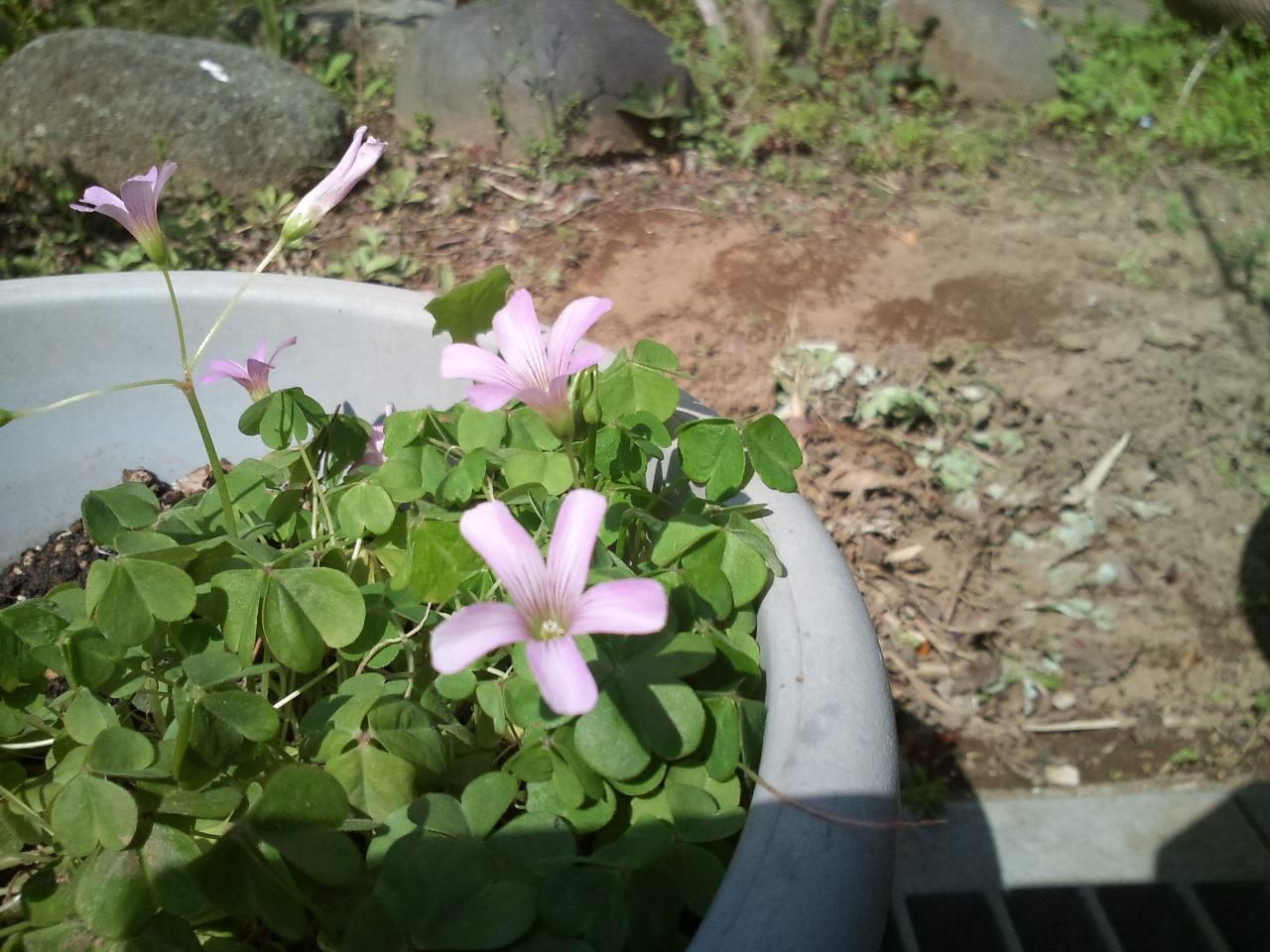 春の花_e0246300_14222384.jpg