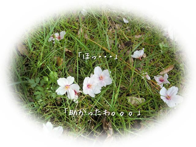 d0243802_1214526.jpg