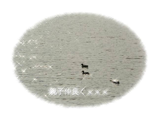 d0243802_123585.jpg