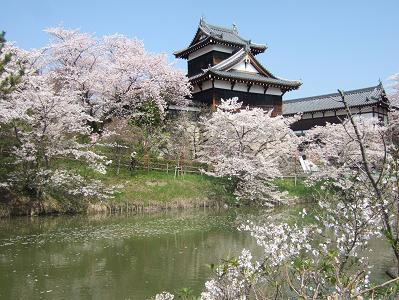 桜名所めぐり 大和郡山城址_d0227610_11415147.jpg