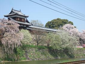桜名所めぐり 大和郡山城址_d0227610_11462354.jpg