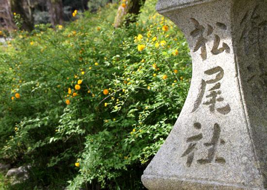 松尾大社_e0048413_21224736.jpg