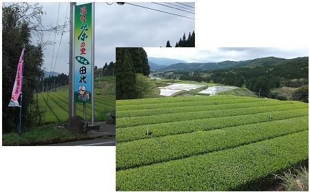 香り高い茶の産地鹿児島県大隅半島田代地区_d0108817_8474560.jpg