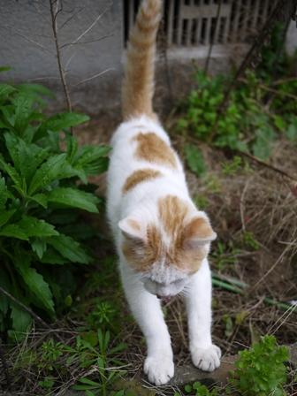 迷子猫のお友だち カダンくん編。_a0143140_22135554.jpg