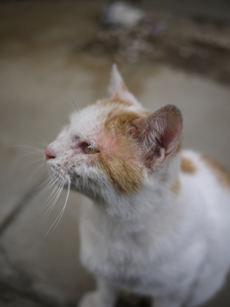 迷子猫のお友だち カダンくん編。_a0143140_22164436.jpg