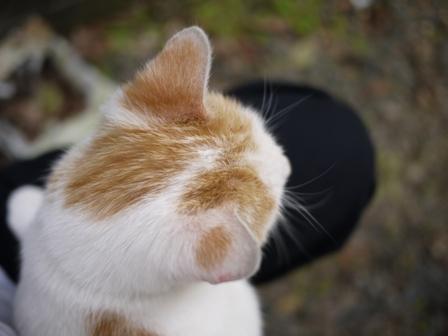 迷子猫のお友だち カダンくん編。_a0143140_2295540.jpg