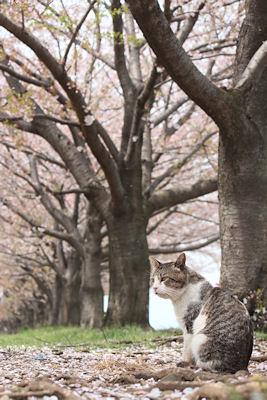 桜散る!_d0034352_0113774.jpg