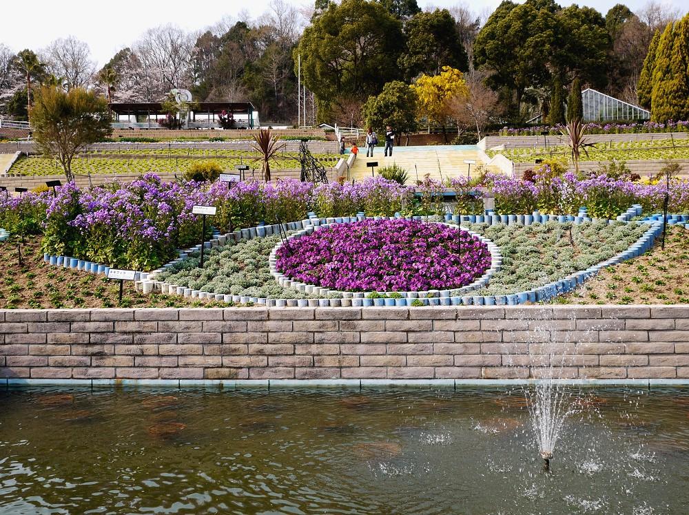和歌山県植物公園緑花センター _b0093754_2331333.jpg
