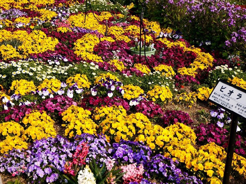 和歌山県植物公園緑花センター _b0093754_2332621.jpg