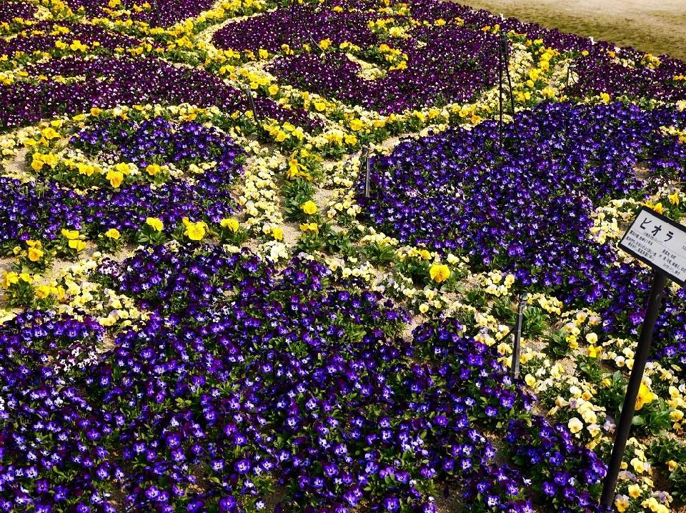 和歌山県植物公園緑花センター _b0093754_2333838.jpg