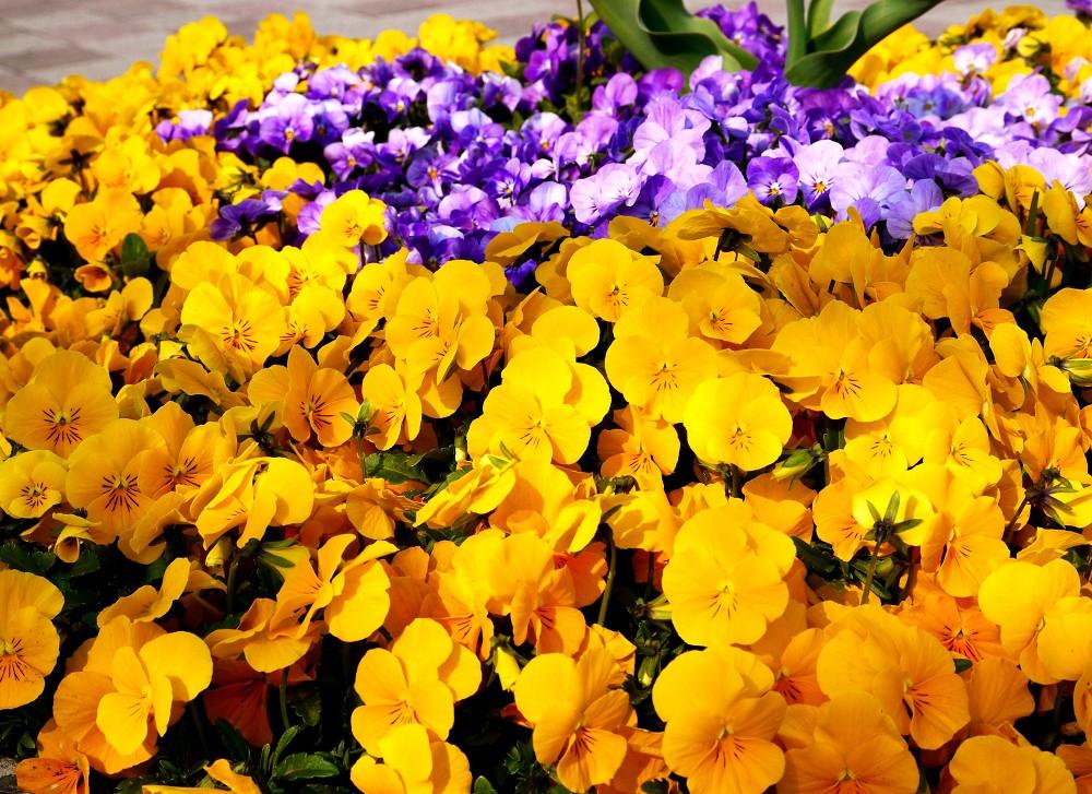 和歌山県植物公園緑花センター _b0093754_234396.jpg