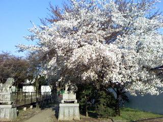 お花見散歩と作品〜_a0108859_2153974.jpg