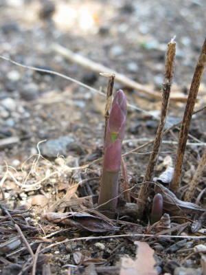 春さがし_a0129867_16113361.jpg