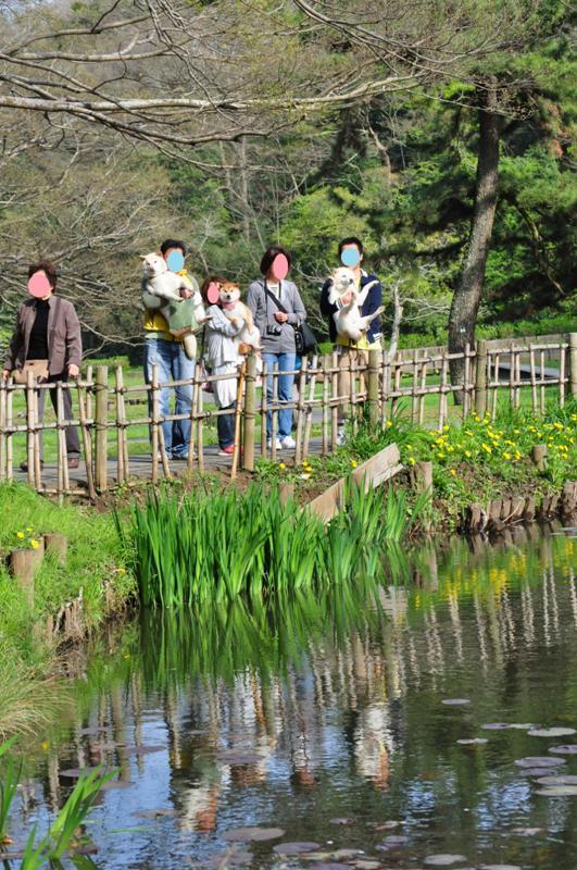 春の水面_a0126590_5511491.jpg