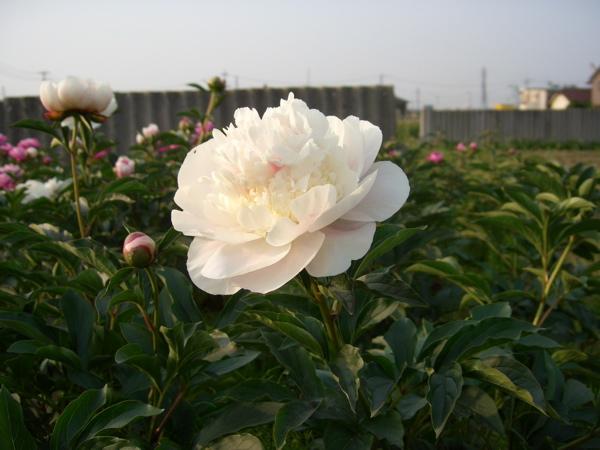 農園のおすすめ花箱_f0162400_946186.jpg