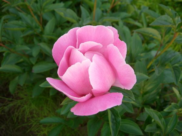 農園のおすすめ花箱_f0162400_9462378.jpg