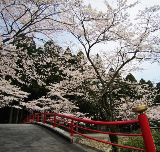 橋と桜_b0083801_0401617.jpg