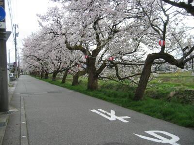 桜!満開!SAKURA☆2012_c0113001_0475419.jpg