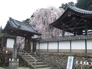 桜名所めぐり 大野寺_d0227610_19332315.jpg
