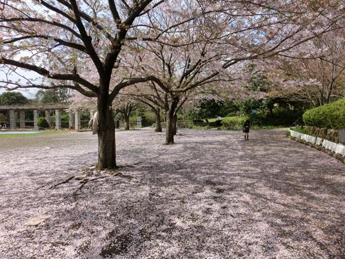長久保公園でお花見_e0174913_9424625.jpg