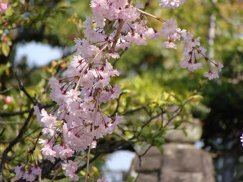 須磨寺で敦盛に会えました!_f0223914_19341921.jpg