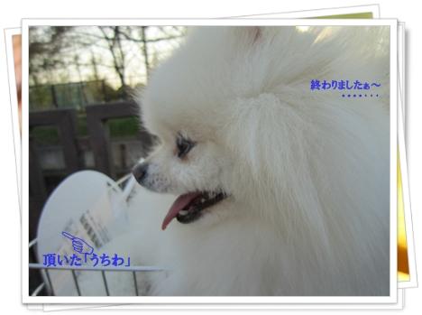 b0167519_141113.jpg