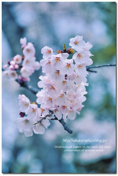 SAKURA 2012 ~Kodak Kodachrome 64テイスト~_f0235723_17242024.jpg