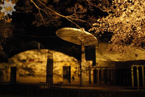 夜の桜、夜のカピバラ_f0138828_21275538.jpg