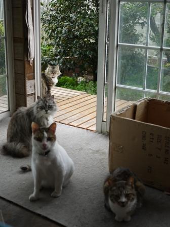 猫のお友だち ハナちゃんセトラちゃんホビちゃんエムくんチコちゃんライオンちゃん&いっぱい編。_a0143140_221935100.jpg