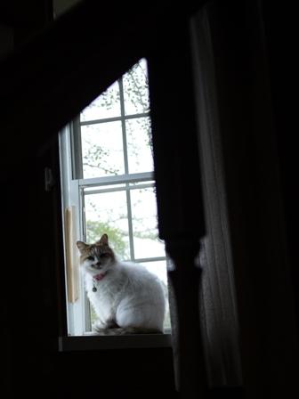 猫のお友だち ハナちゃんセトラちゃんホビちゃんエムくんチコちゃんライオンちゃん&いっぱい編。_a0143140_22381194.jpg
