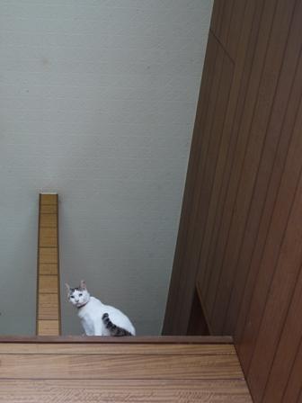 猫のお友だち ハナちゃんセトラちゃんホビちゃんエムくんチコちゃんライオンちゃん&いっぱい編。_a0143140_223930100.jpg