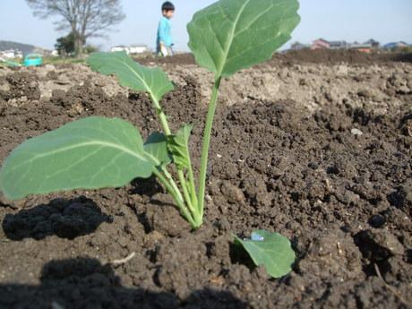 我が家の畑9 夏野菜_d0191262_2332643.jpg