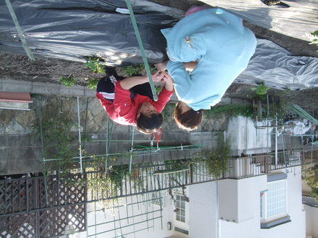 我が家の畑9 夏野菜_d0191262_2361673.jpg
