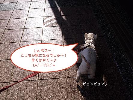b0177868_20324360.jpg
