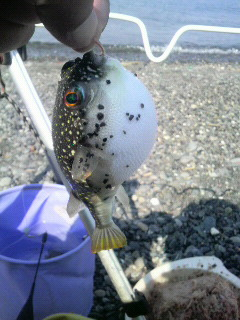今年初釣行は三保_f0228680_9255947.jpg