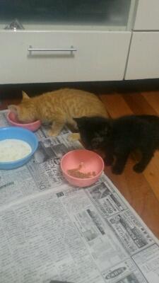 猫ちゃんがやって来た_d0172085_19445293.jpg