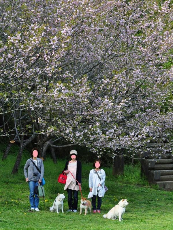 桜の木の下で_a0126590_4573193.jpg