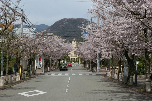 素敵な桜をさがして・・・関西学院大学の桜、夙川の桜、王子動物園の桜、九州の桜、お城の桜(3/7)_d0181492_21431413.jpg