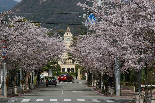 素敵な桜をさがして・・・関西学院大学の桜、夙川の桜、王子動物園の桜、九州の桜、お城の桜(3/7)_d0181492_21432779.jpg