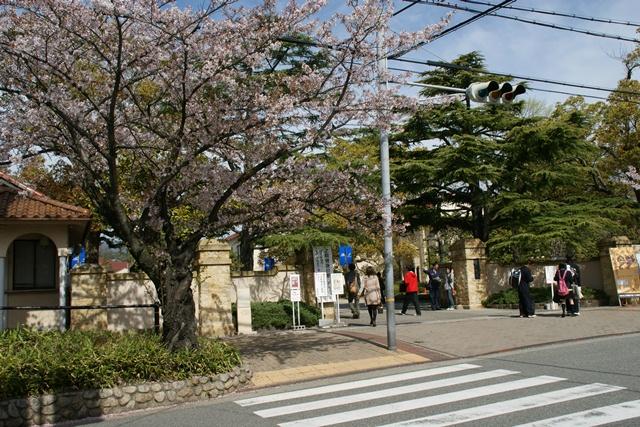 素敵な桜をさがして・・・関西学院大学の桜、夙川の桜、王子動物園の桜、九州の桜、お城の桜(3/7)_d0181492_21433870.jpg