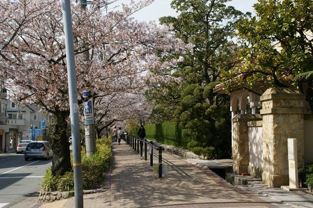素敵な桜をさがして・・・関西学院大学の桜、夙川の桜、王子動物園の桜、九州の桜、お城の桜(3/7)_d0181492_21434954.jpg