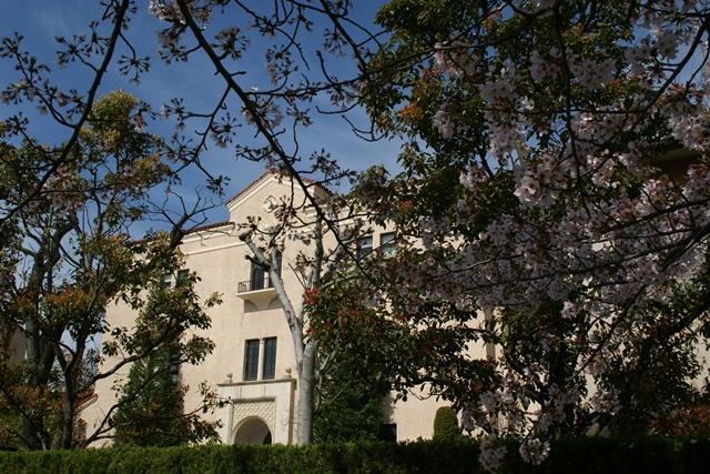素敵な桜をさがして・・・関西学院大学の桜、夙川の桜、王子動物園の桜、九州の桜、お城の桜(3/7)_d0181492_2144270.jpg