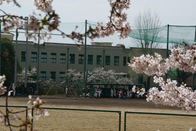 素敵な桜をさがして・・・関西学院大学の桜、夙川の桜、王子動物園の桜、九州の桜、お城の桜(3/7)_d0181492_21445888.jpg