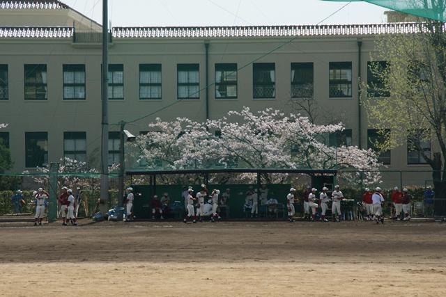 素敵な桜をさがして・・・関西学院大学の桜、夙川の桜、王子動物園の桜、九州の桜、お城の桜(3/7)_d0181492_21462042.jpg