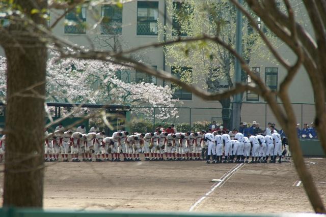 素敵な桜をさがして・・・関西学院大学の桜、夙川の桜、王子動物園の桜、九州の桜、お城の桜(3/7)_d0181492_21463722.jpg