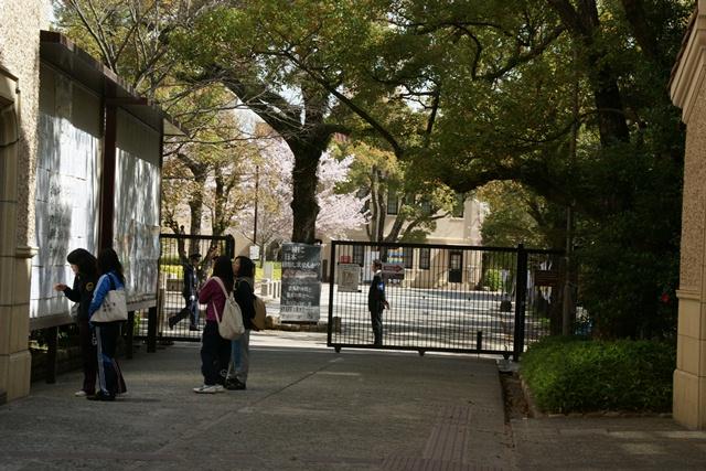 素敵な桜をさがして・・・関西学院大学の桜、夙川の桜、王子動物園の桜、九州の桜、お城の桜(3/7)_d0181492_21473358.jpg