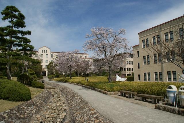 素敵な桜をさがして・・・関西学院大学の桜、夙川の桜、王子動物園の桜、九州の桜、お城の桜(3/7)_d0181492_21484578.jpg