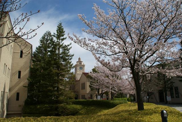 素敵な桜をさがして・・・関西学院大学の桜、夙川の桜、王子動物園の桜、九州の桜、お城の桜(3/7)_d0181492_2149370.jpg