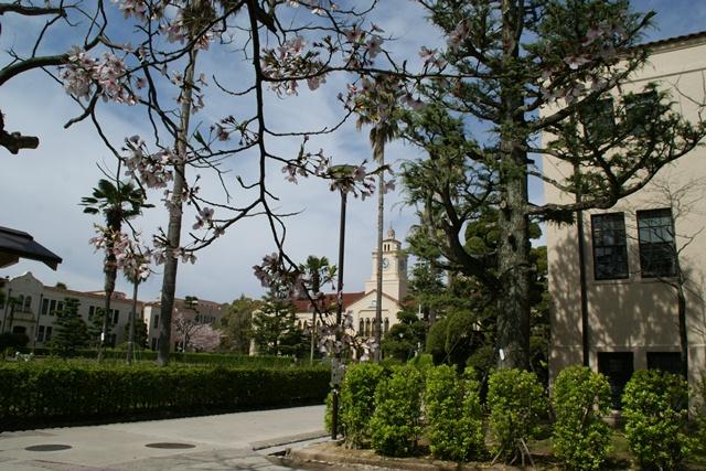 素敵な桜をさがして・・・関西学院大学の桜、夙川の桜、王子動物園の桜、九州の桜、お城の桜(3/7)_d0181492_21494748.jpg